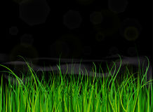 Яркая и сочная зеленая трава на предпосылке голубого неба Стоковое Фото