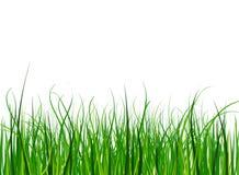 Яркая и сочная зеленая трава на предпосылке голубого неба Стоковые Изображения