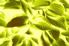 Яркая картина лист прованского зеленого цвета иллюстрация штока