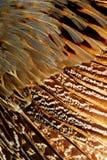 Яркая коричневая группа в составе пера некоторая птица Стоковые Изображения