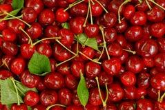 Яркая красная предпосылка зрелой красной вишни Стоковые Изображения RF