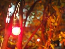 Яркая красная электрическая лампочка смертной казни через повешение, предпосылка куста дерева зарева, ноча Стоковые Фото
