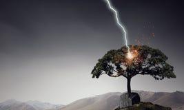 Яркая молния ударила дерево Стоковые Изображения