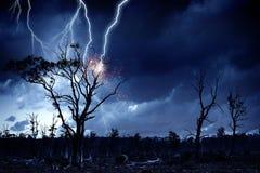 Яркая молния ударила дерево Стоковые Фотографии RF