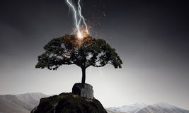 Яркая молния ударила дерево Стоковые Изображения RF