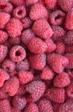 Яркая очень вкусная естественная предпосылка много зрелое сочное красное fragr Стоковое Изображение