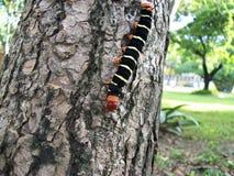 Яркая покрашенная гусеница Стоковое Изображение