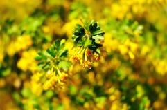 Предпосылка весны Стоковое фото RF