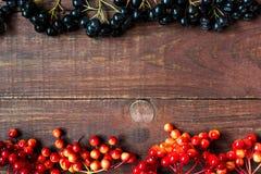 Яркая предпосылка осени с калиной и chokeberry ягод стоковая фотография