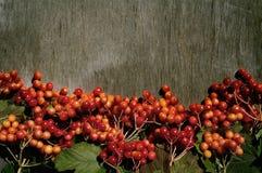 Яркая предпосылка осени с калиной ягод Стоковые Изображения
