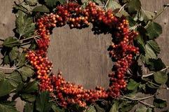 Яркая предпосылка осени с калиной ягод Стоковое Фото