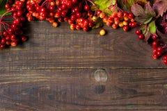 Яркая предпосылка осени с калиной ягод Стоковое фото RF