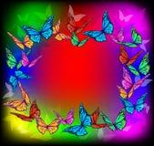 Яркая рамка бабочки Стоковые Изображения RF