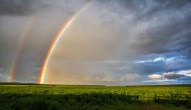Яркая радуга после дождя над полем Стоковые Изображения