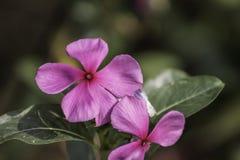 Яркая свежего цветка красивая стоковое изображение