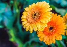 Яркая свежего цветка красивая стоковое изображение rf