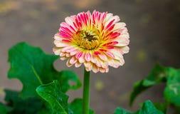 Яркая свежего цветка красивая стоковая фотография rf