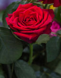 Яркая свежего цветка красивая стоковые фото