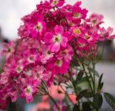 Яркая свежего цветка красивая стоковая фотография
