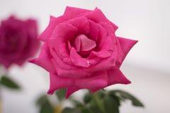 Яркая свежего цветка красивая стоковые изображения rf