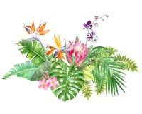 Яркая тропическая граница с листьями и цветками джунглей иллюстрация вектора