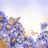 Яркая хризантема весны Стоковое Изображение RF