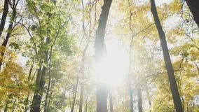 Яркие блески солнца через лес осени акции видеоматериалы