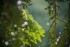 Яркие блески зеленого цвета Стоковая Фотография RF