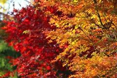 Яркие ветви осени Стоковое Фото