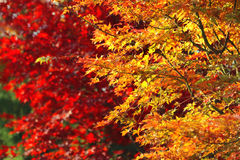 Яркие ветви осени Стоковые Изображения RF