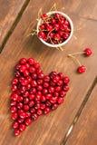 Яркие вишни красного цвета свеже выбранные предыдущие сладостные Стоковые Изображения RF