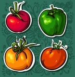 яркие вкусные овощи томатов Стоковое фото RF
