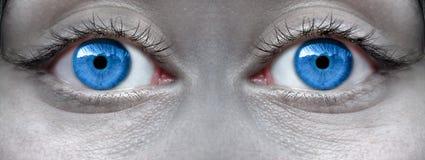 Яркие голубые глазы Стоковое фото RF