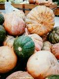 Яркие декоративные тыквы в естественных цветах стоковые изображения