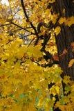 Яркие желтые листья осени стоковые изображения rf