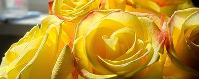 Яркие желтые розы Стоковые Фото