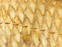 Яркие золотые масштабы Стоковое Изображение