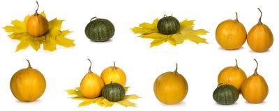Яркие зрелые тыквы и листья осени Стоковые Фото