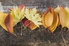 Яркие листья лежа на дереве в расположении стоковые изображения rf