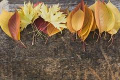 Яркие листья лежа на дереве стоковая фотография