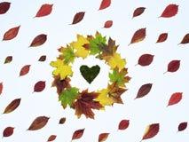 Яркие листья красного цвета и кленовый лист венка Стоковые Фотографии RF