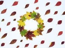 Яркие листья красного цвета и кленовый лист венка Стоковое Изображение RF