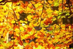 Яркие листья осени, деревья падения Стоковая Фотография RF