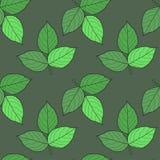 яркие листья Стоковое Изображение