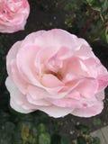 Яркие и живые цветки Стоковые Изображения RF
