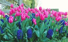 Яркие и красочные цветки Стоковые Изображения