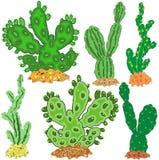 Яркие и необыкновенные кактусы иллюстрация штока