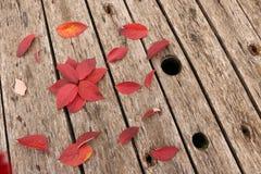 Яркие красивые листья осени на деревянной предпосылке Стоковое Фото