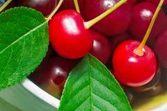 Яркие красно- очень вкусные зрелые вишни Стоковое фото RF