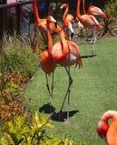 Яркие красные птицы фламинго Стоковое Фото
